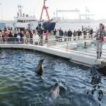 Im Aquarium GEOMAR werfen große und kleine Besucherinnen und Besucher einen Blick hinter die Kulissen und schauen bei der Fütterung der Seehunde zu. Copyright: CAU, Foto: Christina Kiefer