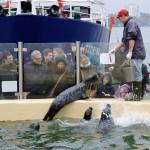 Bildunterschrift: Große und kleine Besucherinnen und Besucher erleben die Seehundfütterung im Aquarium GEOMAR Copyright: CAU, Foto: Stefan Kolbe